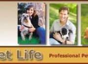 Popular Pet Sitter / Dog Walker Available For Your Pet