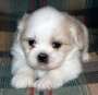 BRILLIANT HOME TRAINED SHIH TZU PUPPY READY FOR GOOD HOMES