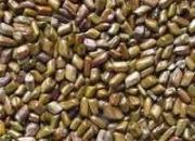 Advantages And Health Benefits Of Myrobalan Belliric Seeds