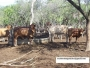 4100 SALE OF YOU STAY IN PARAGUAY STAY U$S 400/HA