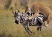 Africa holidays tours kenya tanzania