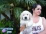 Healthy adorable golden retriever  puppies