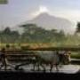 Java Overland Tour - Indonesia
