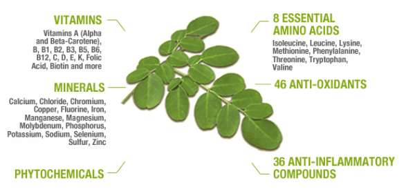 Moringa oleifera is one of the best known source