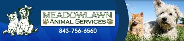 Get the best veterinarian in myrtle beach sc