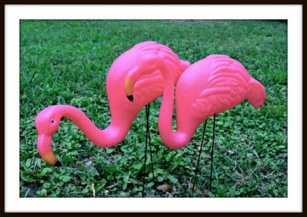 Flocking yard flamingos for fund raising