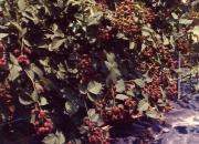 Recipes for blackberries