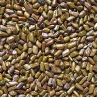 Advantages and health benefits of myrobalan belliric seeds