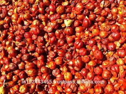 Advantages and medicinal benefits of celastrus paniculatus seeds