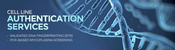Get best cell line authentication service at cell line genetics