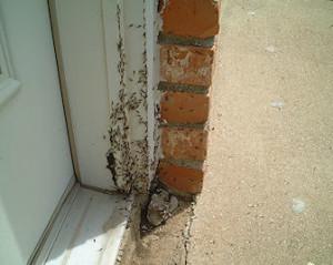 Dallas termite treatments