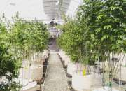 Marijuana delivery in san diego, ca