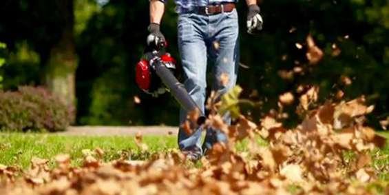 Leaf removal wilder vt